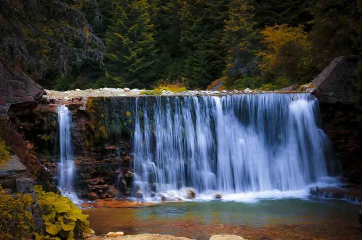 cascade creek flow forest